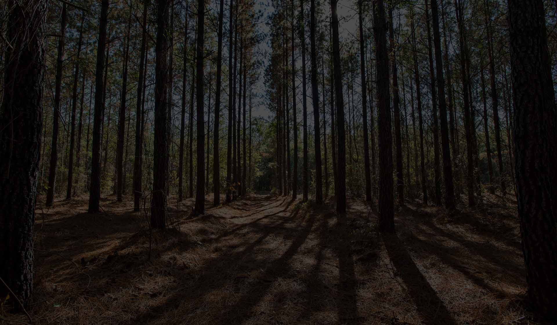 ArborGen Tree Seedlings Forestry Supplier: Pines Hardwoods