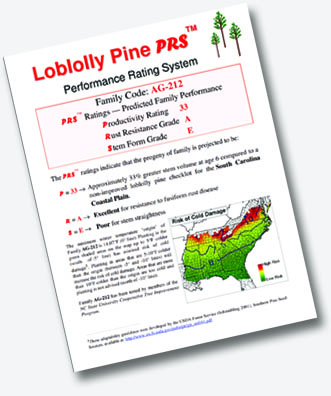 planting guide loblolly pine trees