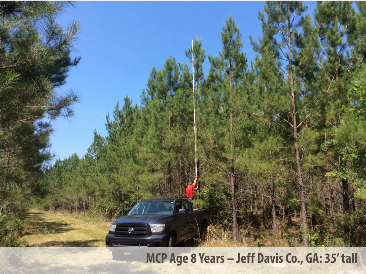 MCP® 35 Feet at 8 Years